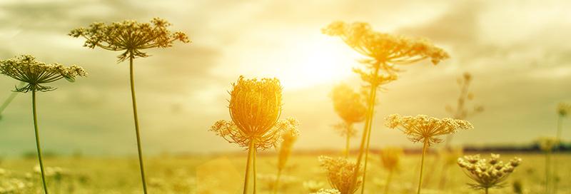 Bilde av en blomstereng i sol